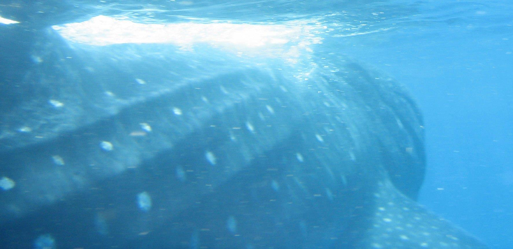 Snorkeling Whale Watching South Padre Island Reviews